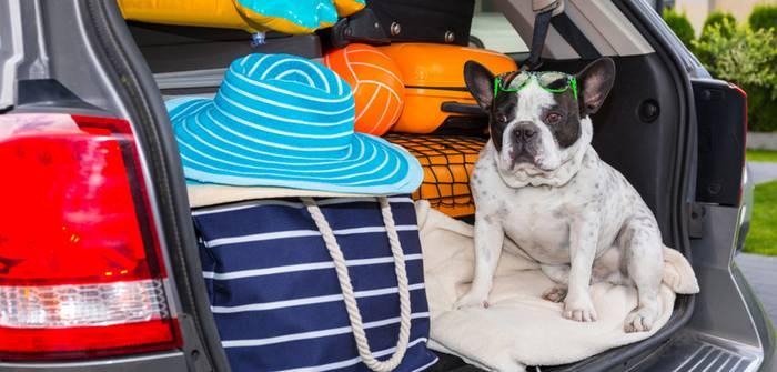 Ferienhaus mit Hund: Hier sind Familien mit Haustieren willkommen