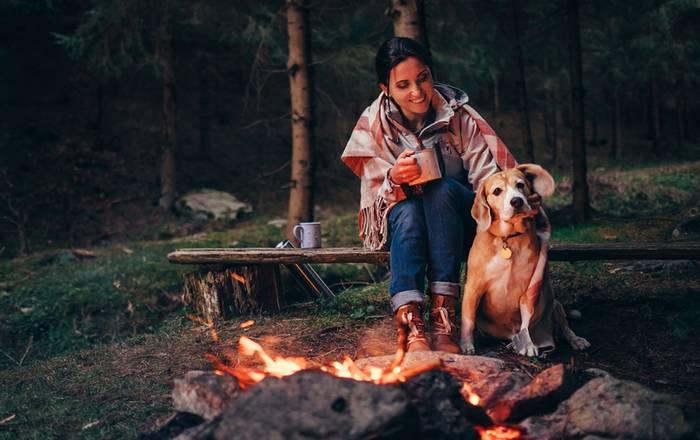 In den Wäldern haben Besitzer und Vierbeiner viel Spaß zusammen. (Foto: shutterstock - Soloviova Liudmyla)